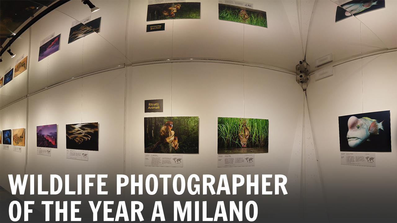 La mostra Wildlife Photographer of the Year 2018 sbarca a Milano