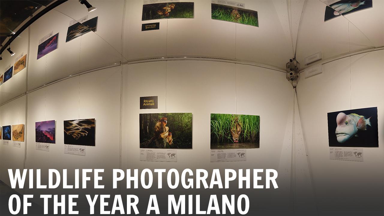 La mostra Wildlife Photographer of the Year 2018 sbarca a Milano